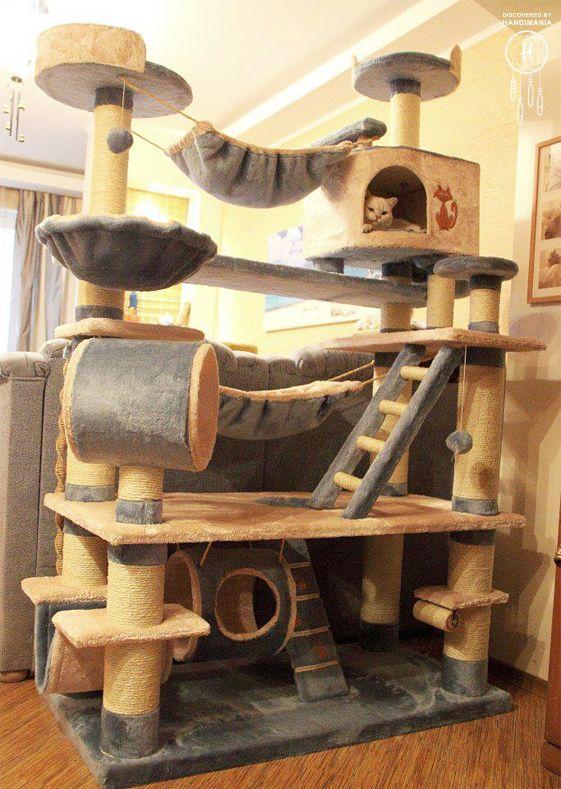 aire de jeux pour chat
