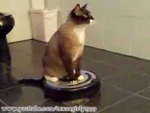 chat sur aspirateur