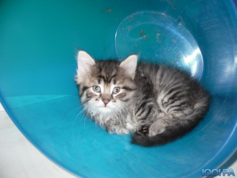chaton a donner 64